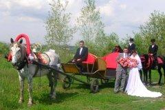"""""""Мустанг"""", конный клуб, прокат лошадей, катание на лошадях в Новосибирске"""