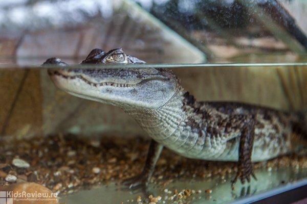 """""""Крокодиловая ферма"""", выставка экзотических животных в ТРК """"Космопорт"""", Самара"""
