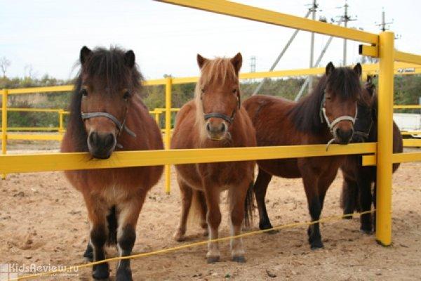 """""""Костин двор"""", конный комплекс, загородный гостевой дом, мини-лошади в Сенькино-Секерино, Подмосковье"""