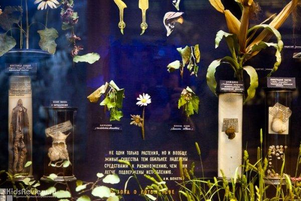 Биологический музей им. К.А. Тимирязева в Москве, фото
