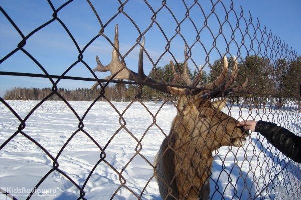 Экскурсия для всей семьи в Висим из Екатеринбурга: хаски, олени, гора Белая, агентство 'ПрофСервис'