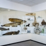 Учебно-научный музей ДВФУ во Владивостоке, фото