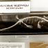 Палеонтологический музей в Москве, фото