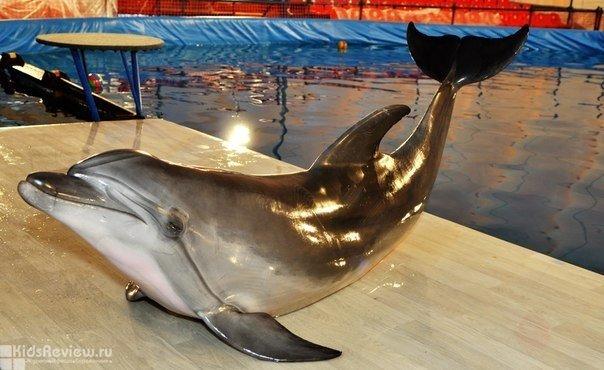 Дельфинарий в Сормовском парке, Нижний Новгород