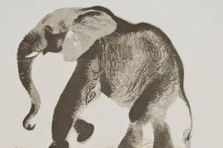 """""""О животных и птицах"""", выставка для детей и взрослых в Краснодарском художественном музее им. Коваленко, Краснодар"""