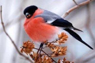 """""""Птичий мир"""", кормление птиц в парке """"Музеон"""" для всей семьи, Москва"""