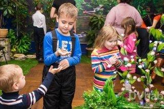 """""""Сад живых бабочек Миндо"""", выставка для всей семьи в Дальневосточном художественном музее, Хабаровск"""