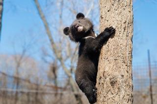 День рождения зоопарка Лимпопо, праздник для всей семьи, Нижний Новгород