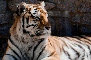 """Международный День тигра, праздник для всей семьи в зоосаду """"Приамурский"""", Хабаровск"""