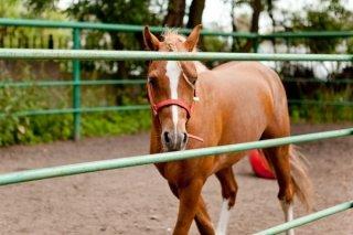 """""""Друг лошади. Погружение в профессию"""", встреча для детей от 5 лет от творческой мастерской """"Книжжучки"""", Хабаровск"""