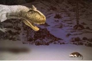 """""""Политическая"""" палеонтология. Что важнее в эволюции - сила или дипломатия?"""", лекция для детей от 12 лет в Музее пермских древностей"""