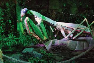 """""""Гигантские насекомые"""", выставка-приключение в Московском зоопарке, Москва"""