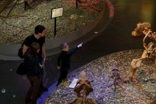 """""""Пять ледниковых периодов"""", квест для детей от 10 лет и их родителей в Музее пермских древностей, Пермь"""